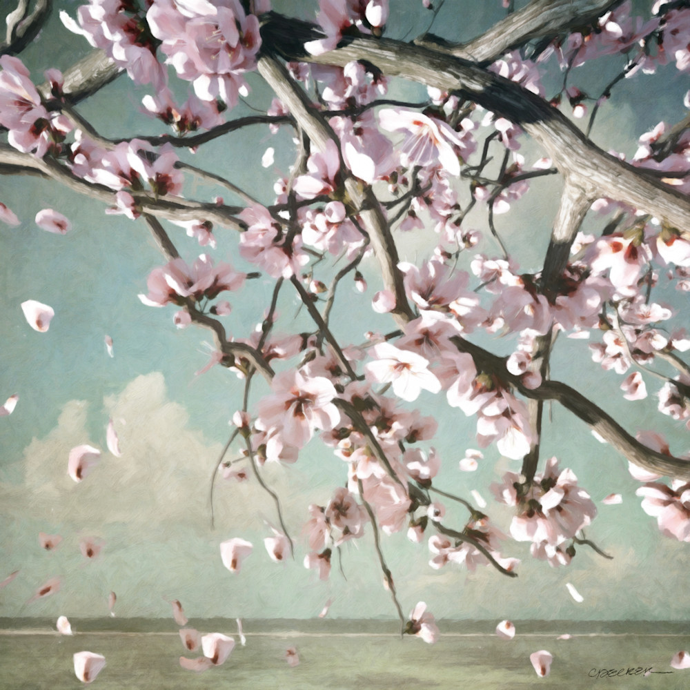 Cherry Blossoms | Cynthia Decker