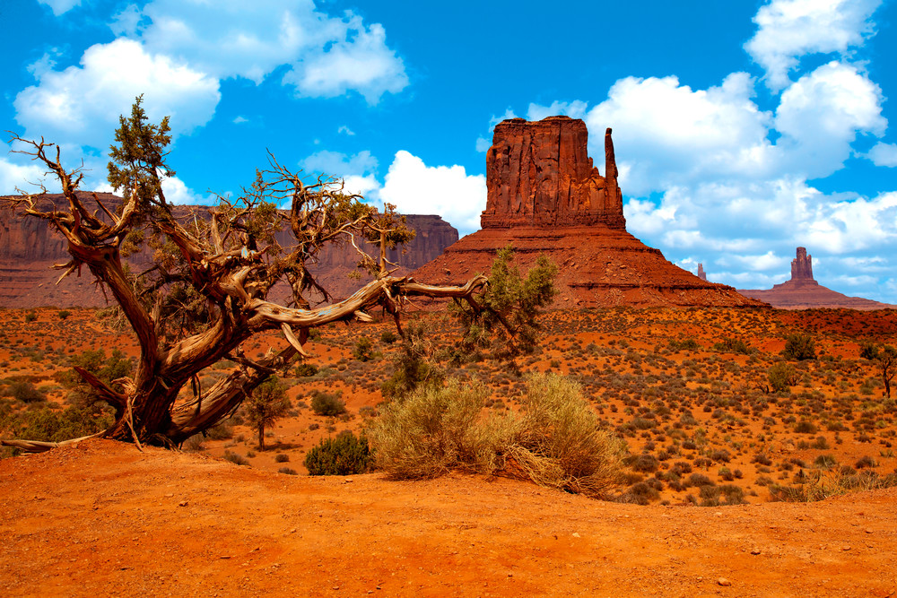 Monument Valley Tree Copy Photography Art | Dale Yakaites Photography