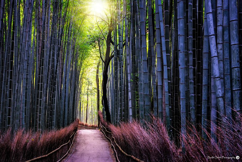 Radiant Path