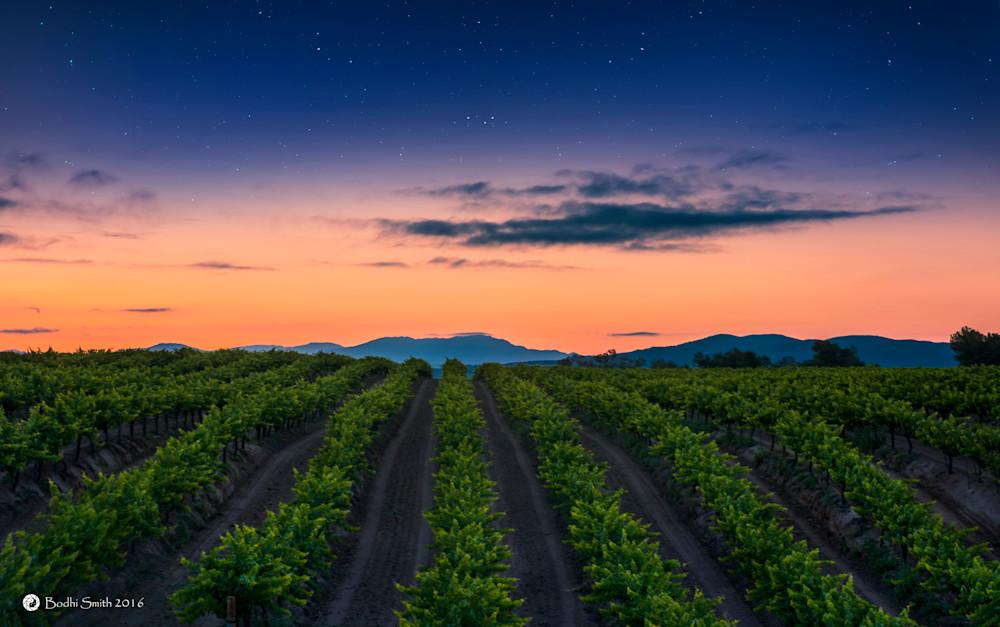 Apricot Dawn
