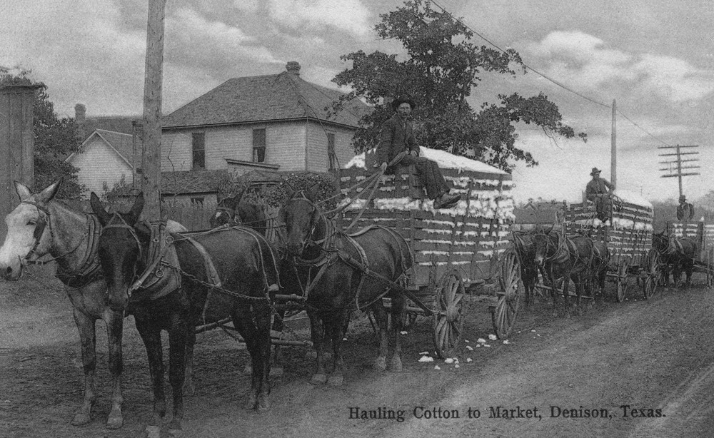 Hauling Cotton to Market