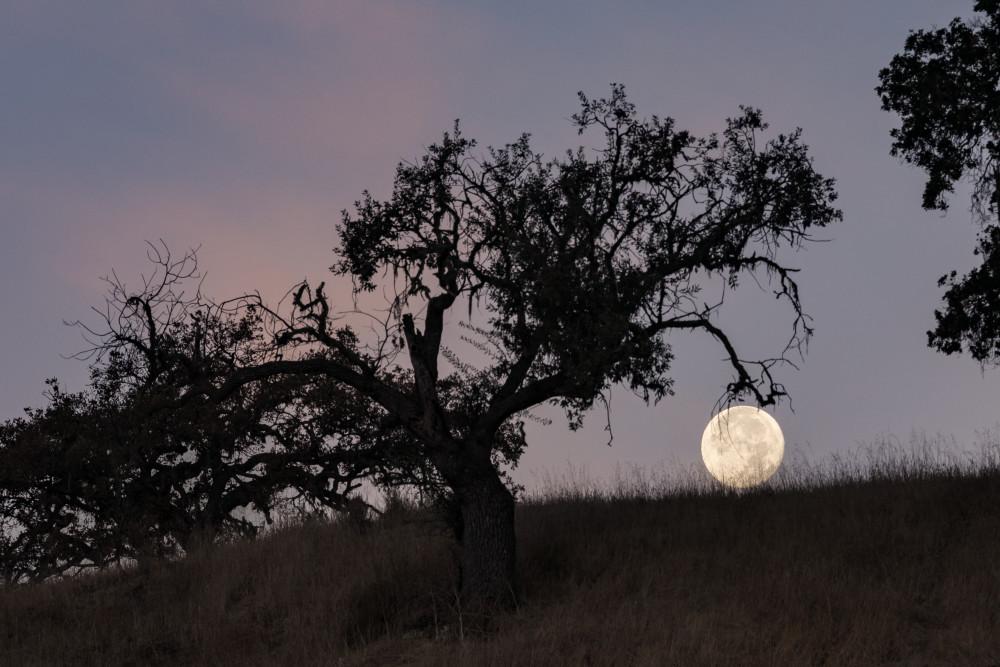setting moon at sunrise 1 of 1