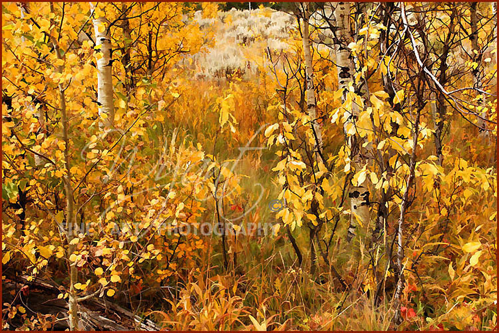 Abstract Fall:  Shop Fine Art Photography | Jim Wyant, Master Craftsman (317)663-4798