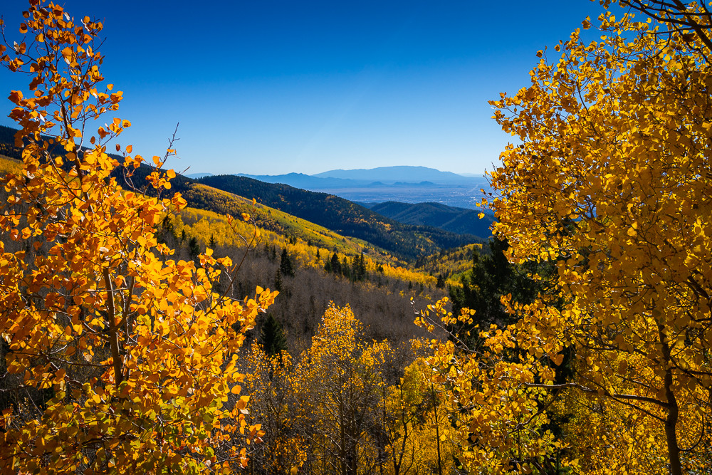 Aspens, Autumn, Landscape, New Mexico, Photography, Sangre de Christo mountains, Santa Fe, Southwest, forest