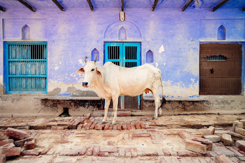 Irridescent India | Kirby Trapolino Fine Art Photography