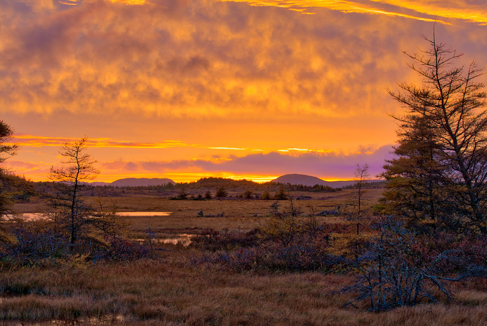 Sunset on the Bog - Burin Peninsula