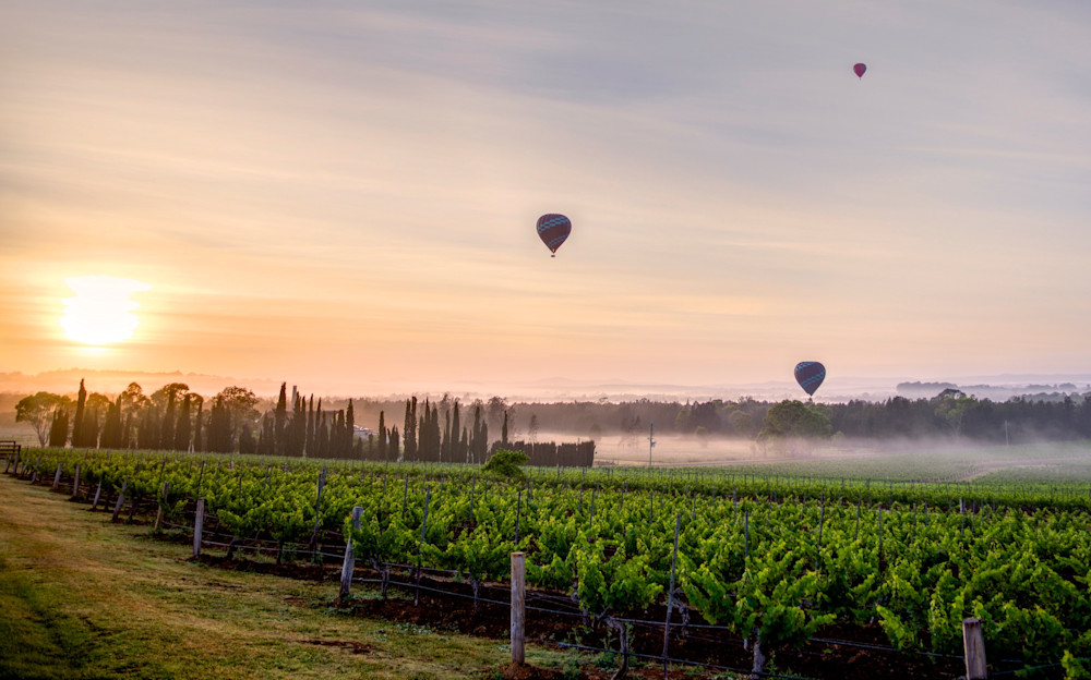 Morning Vines - Pokolbin Hunter Valley Wine Country NSW Australia | Sunrise Hot Air Balloons
