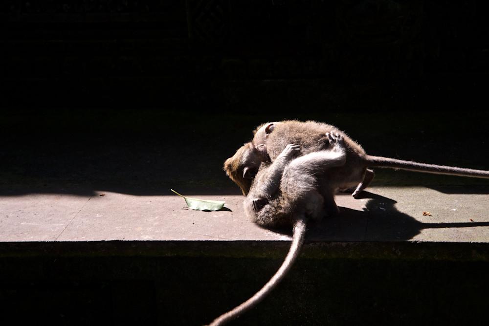 Monkey Capers - Monkey Forest Ubud Bali Indonesia