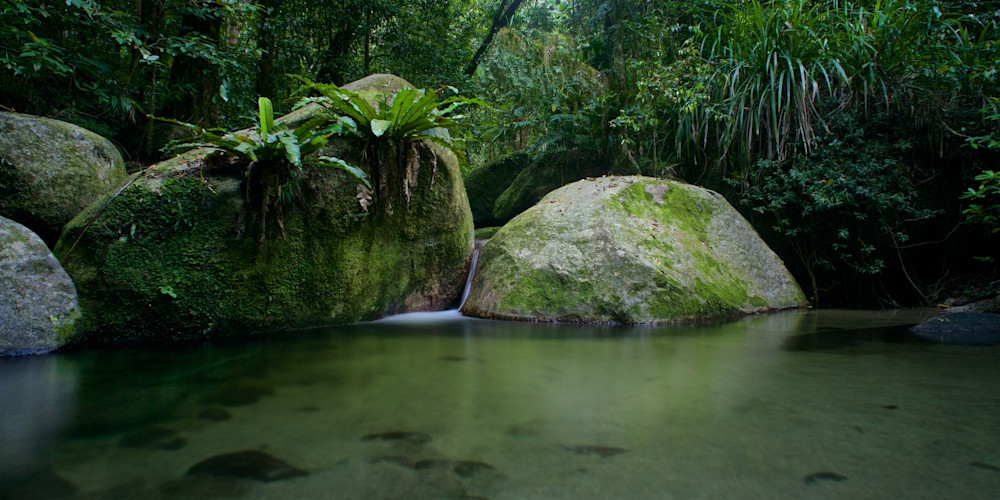 Kuku Yalanji Dreaming - Mossman Gorge Daintree Rainforest Queensland Australia | Limited Edition