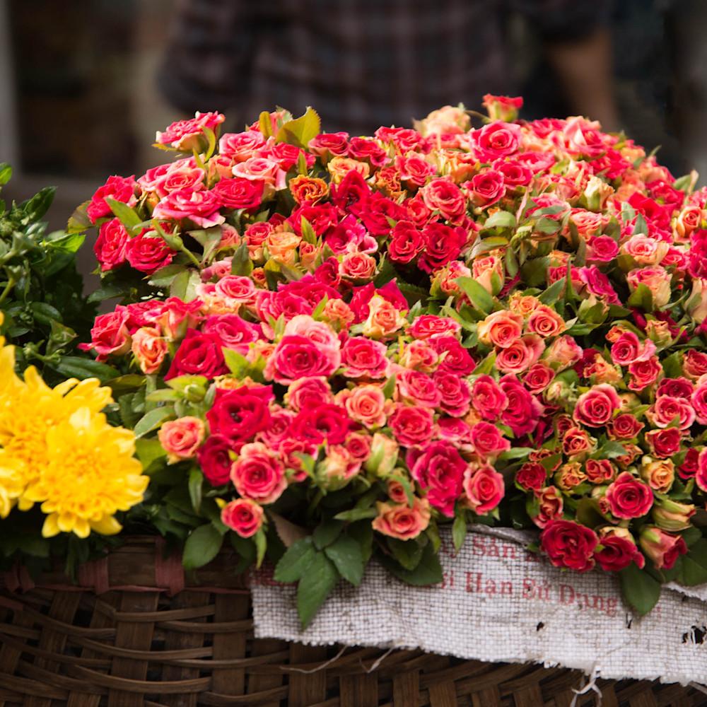 Blooming Beautiful - Hanoi Vietnam | Flora