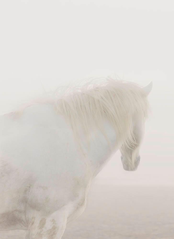 Strength Photography Art | DE LA Gallery