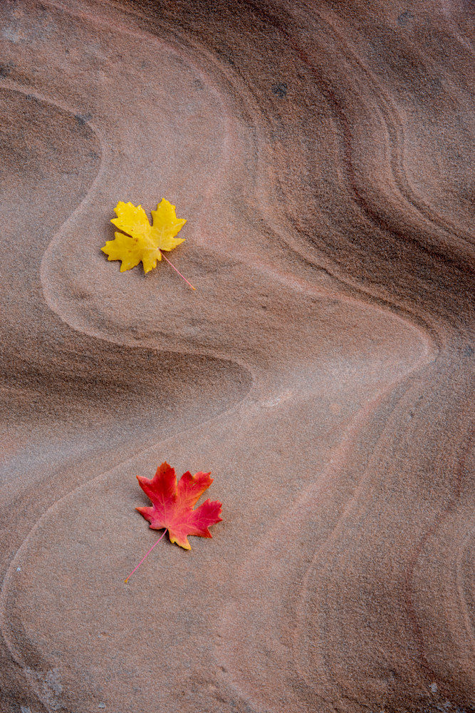 Leaves and Sandstone