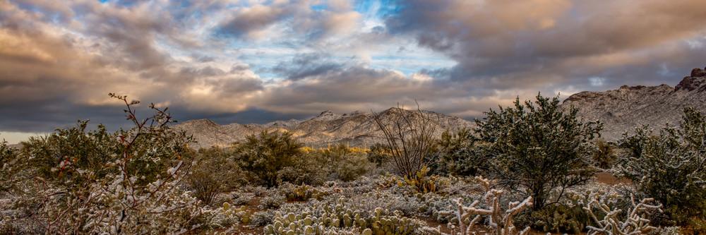 USA, Arizona, Tucson, Tucson Mountain Park