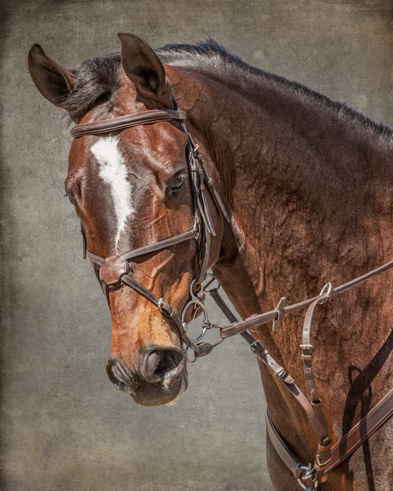 Bridle Portrait of a Bay Mare, color