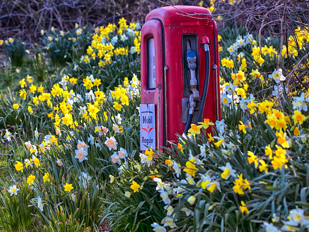 Chilmark Mobile Station Daffodils