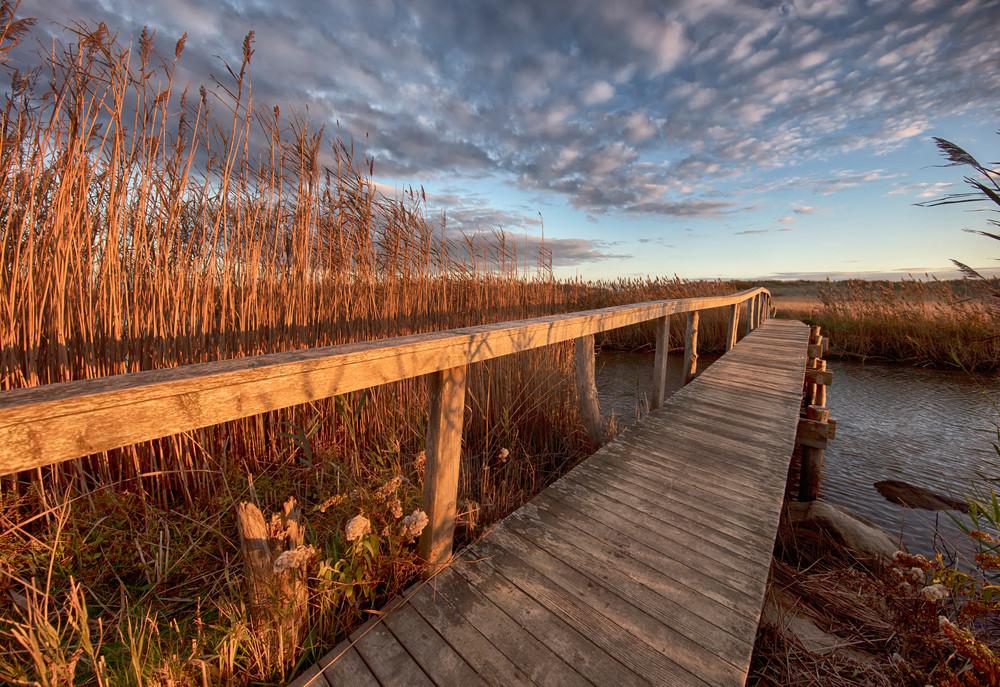 Quansoo Bridge Reeds