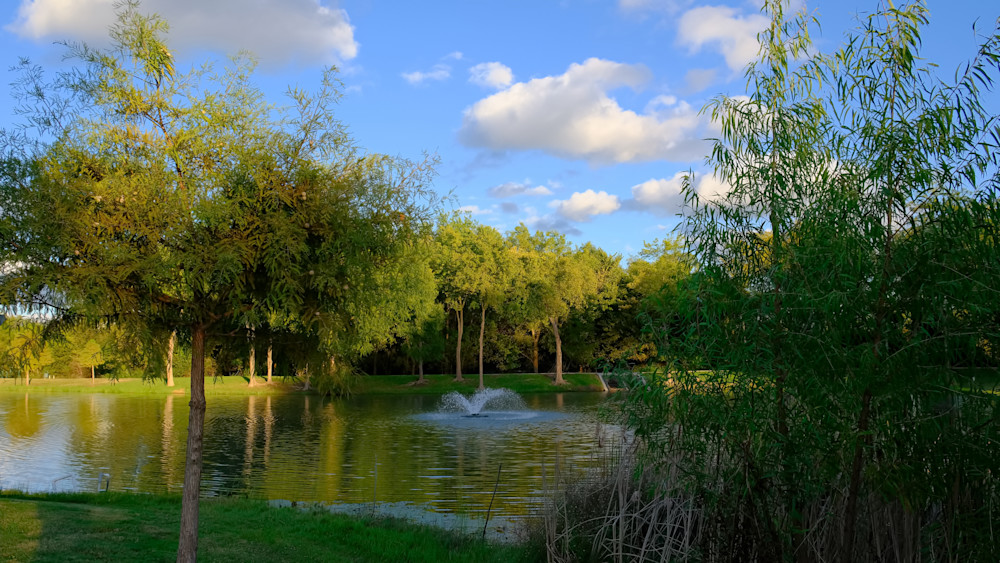 Trees and Pond in Suburban Park