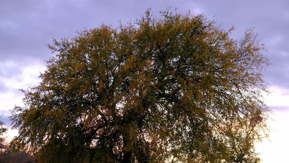 Cloudy Sky Behind Tree