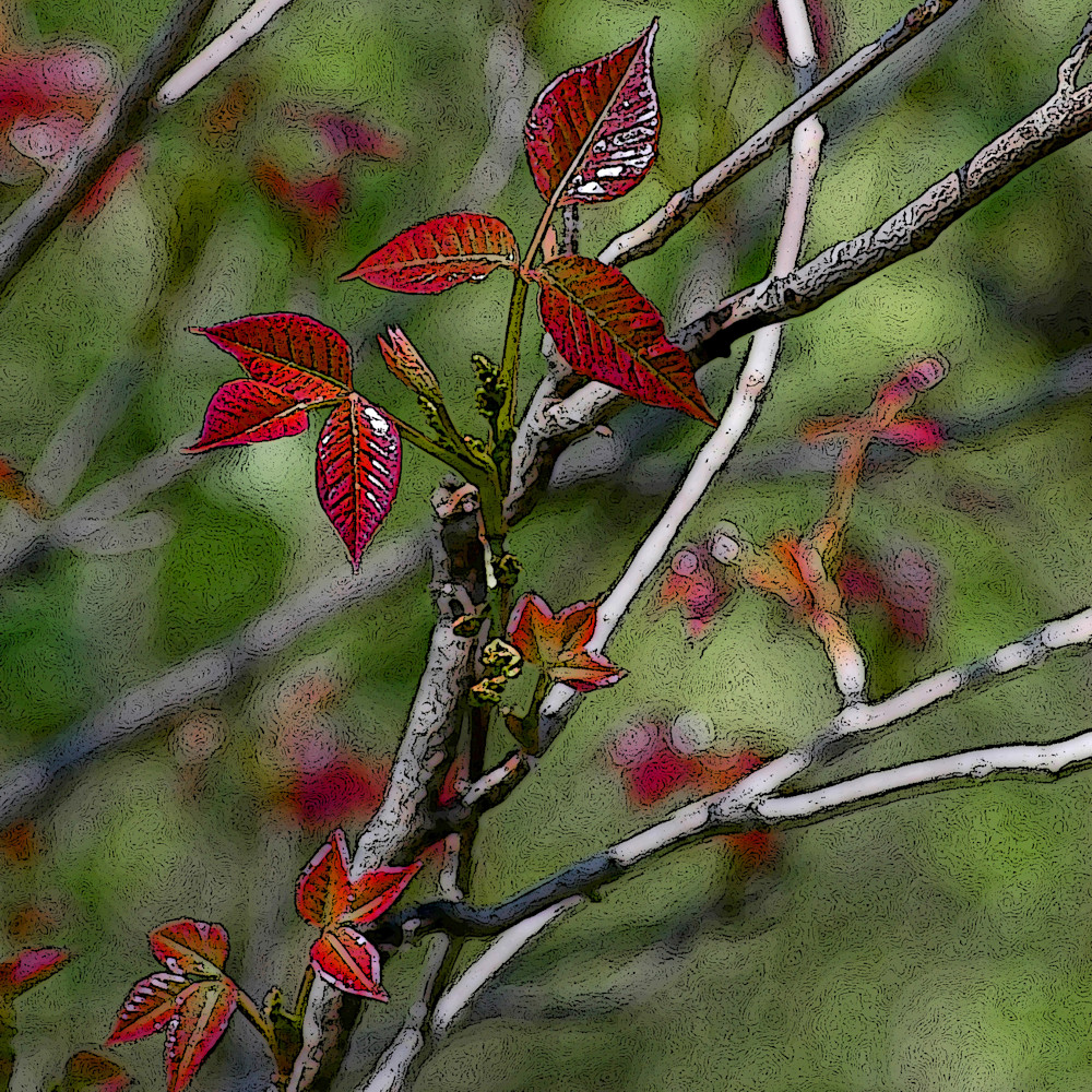Lauree Feldman Poison Ivy