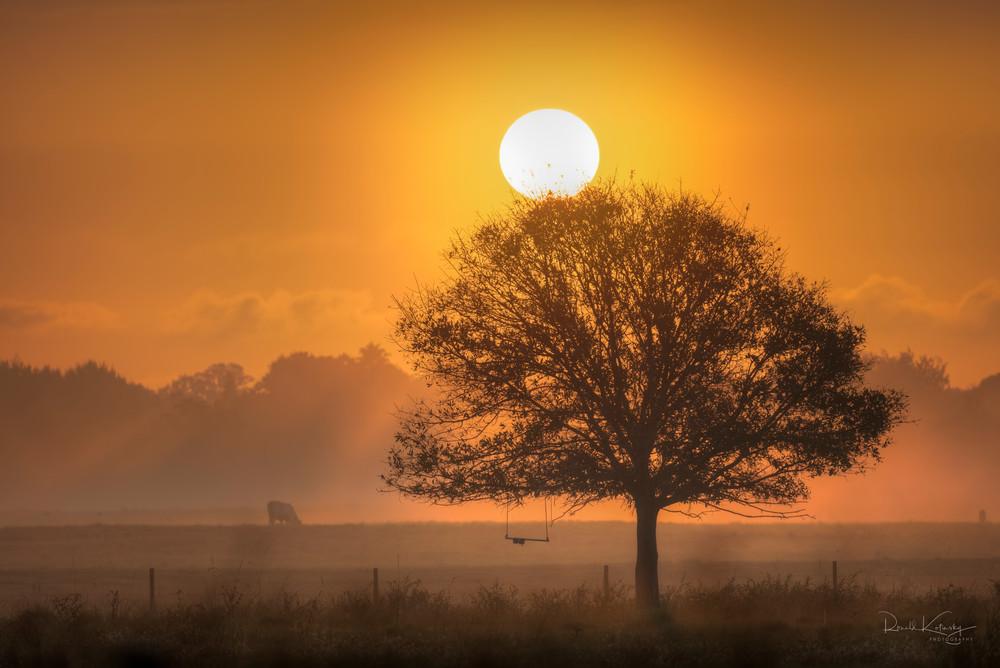 Golden Sunrise at the Pasture Fine Art Photograph