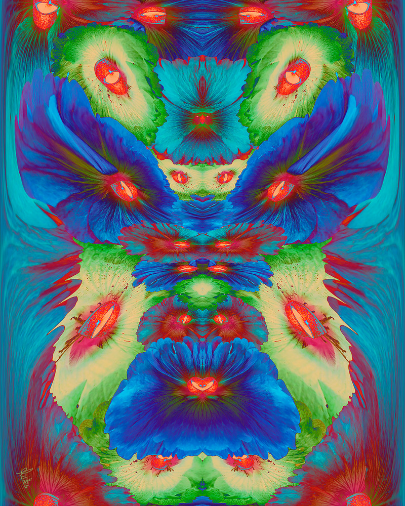 Holly Eyes print of photographs of Holly hocks and Rattlesnake eye transformed into digital art for sale by Maureen Wilks