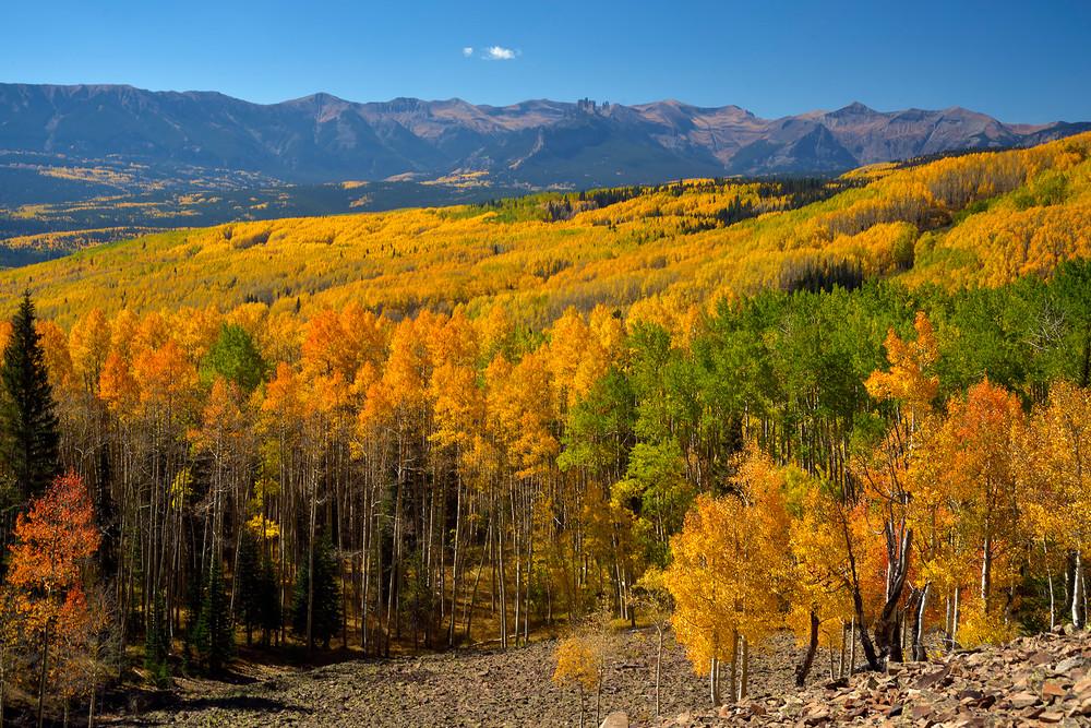 Autumn in the West Elk Wilderness