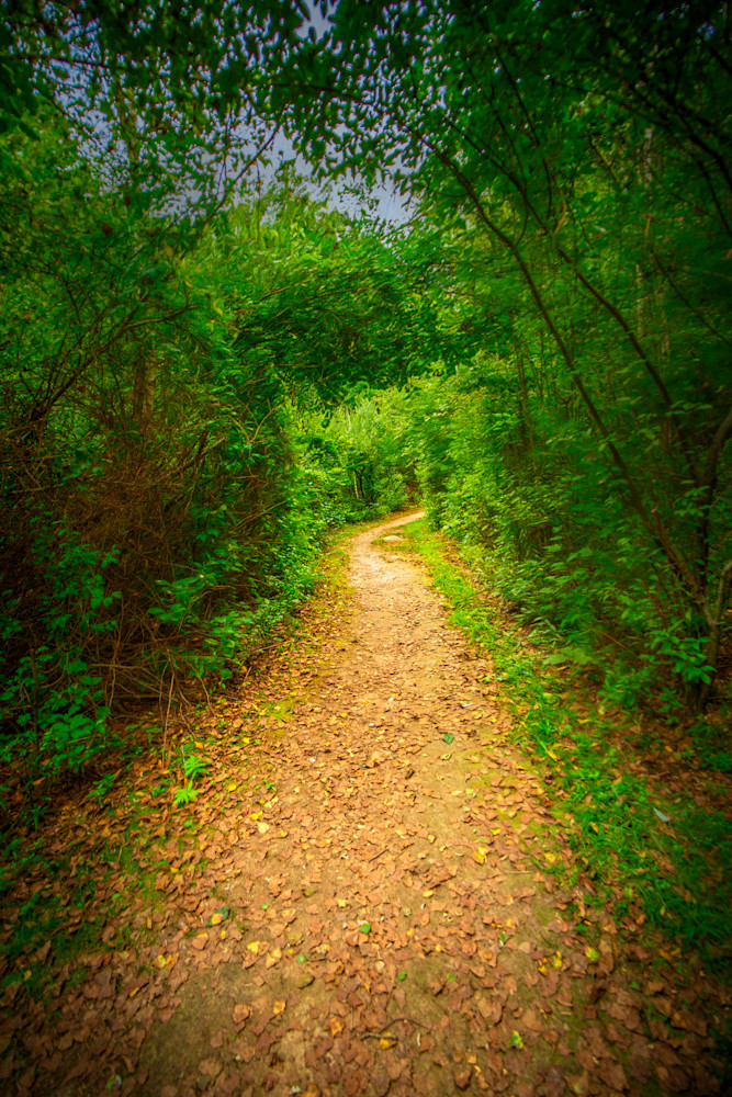 The path leads to home