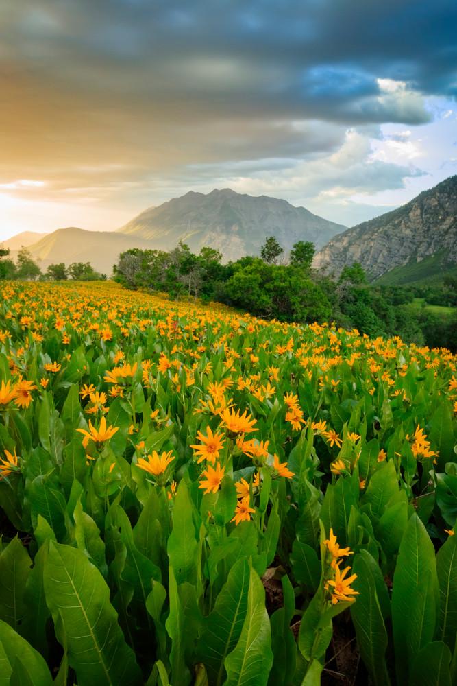 summer wildflowers vertical