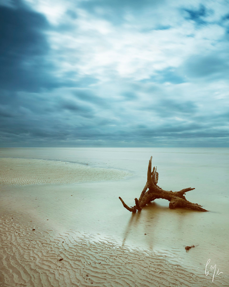 Constance Mier fine art photography in the everglades