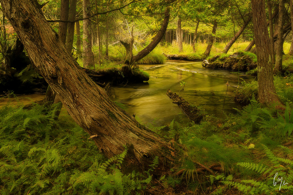 Constance MIer fine art nature Photography - michigan rivers