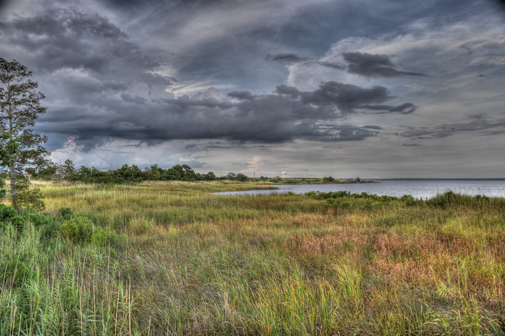 Mobile Bay Marshland