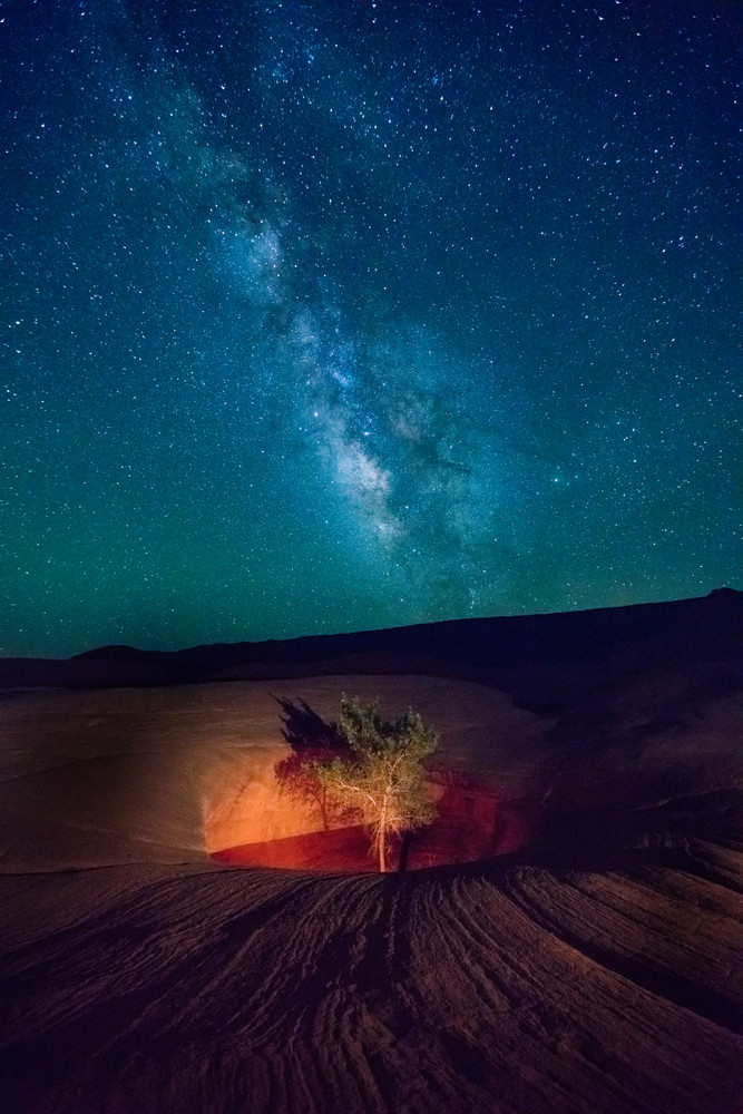 lone tree with the milky way