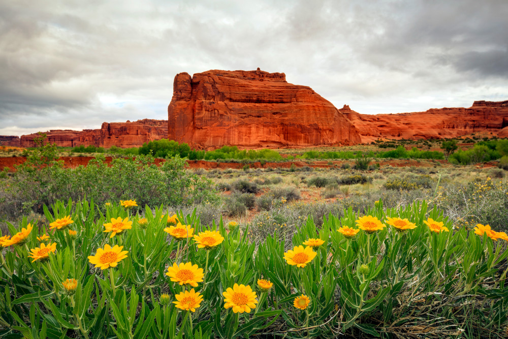 Arches Stormy Wildflowers