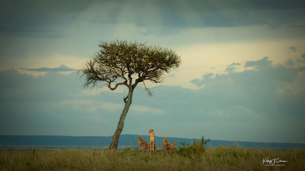 Africa Landscape  5964 Photography Art   Images2Impact