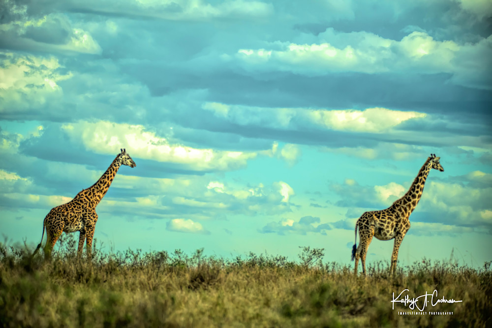 Africa Landscape  6999 Photography Art | Images2Impact