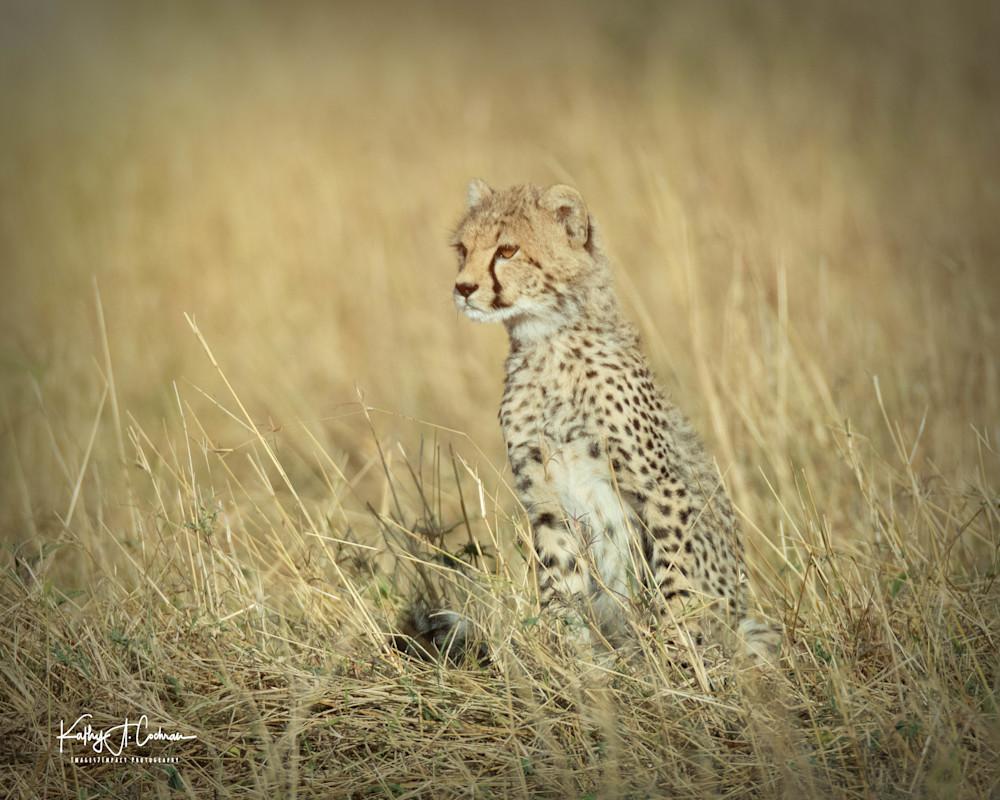 Kenya Cheetah-3829