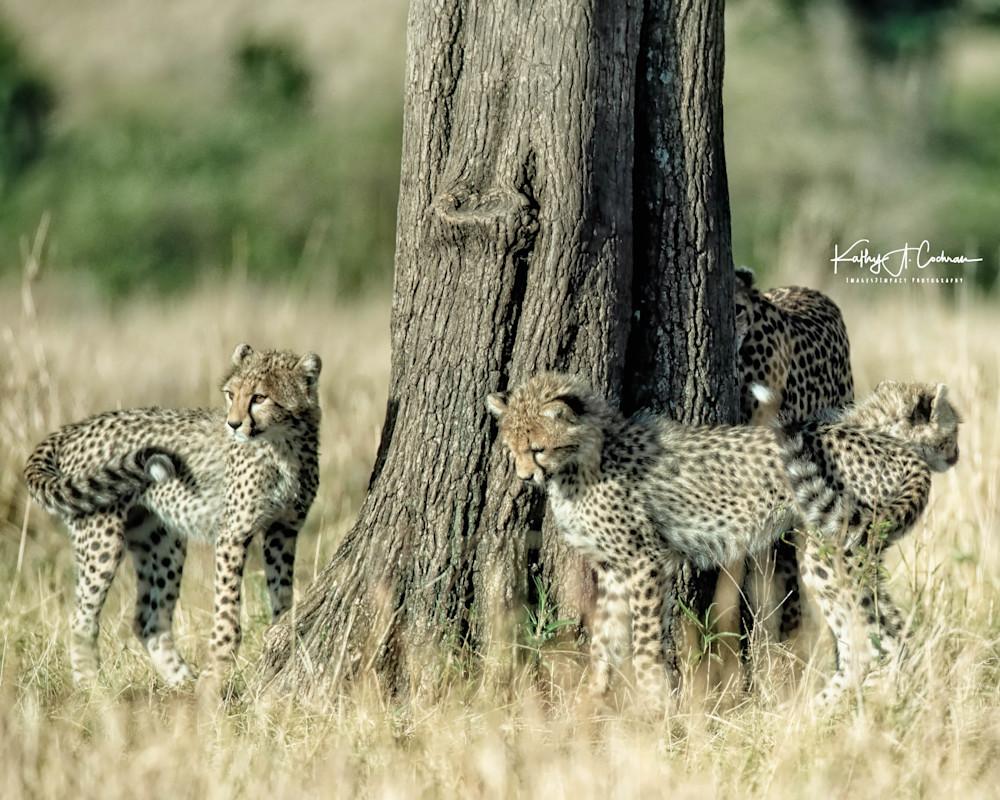 Kenya Cheetah-3955
