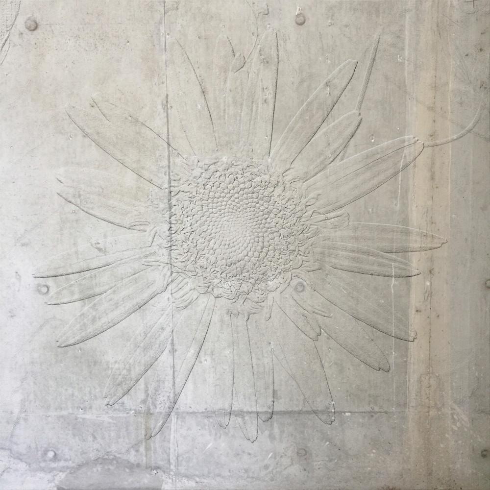 Concrete Daisy