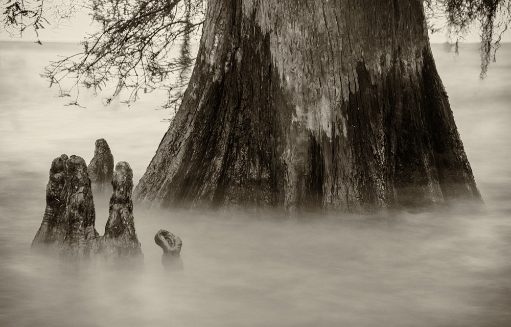 Lake Maurepas cypress swamp photography print