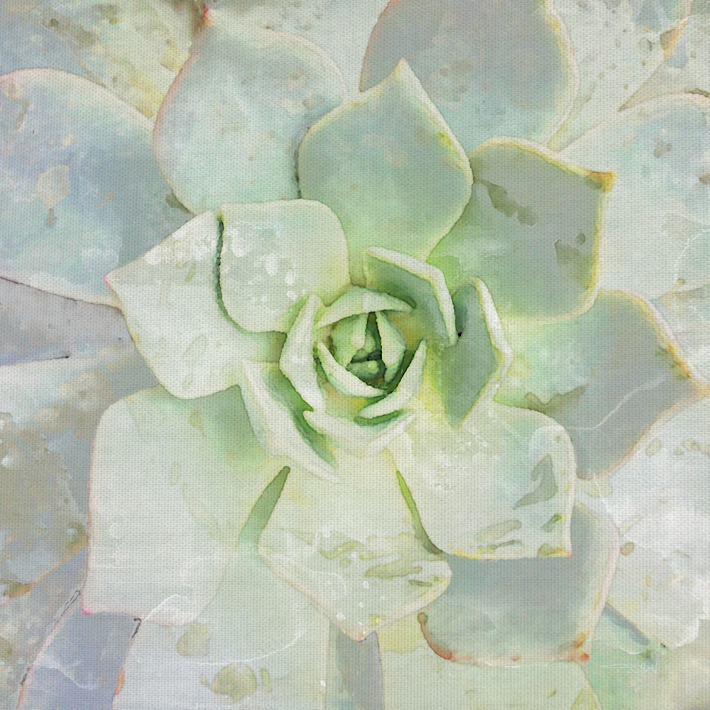 Beauty of a Succulent by artist Irene Orlove Canvas Art Print