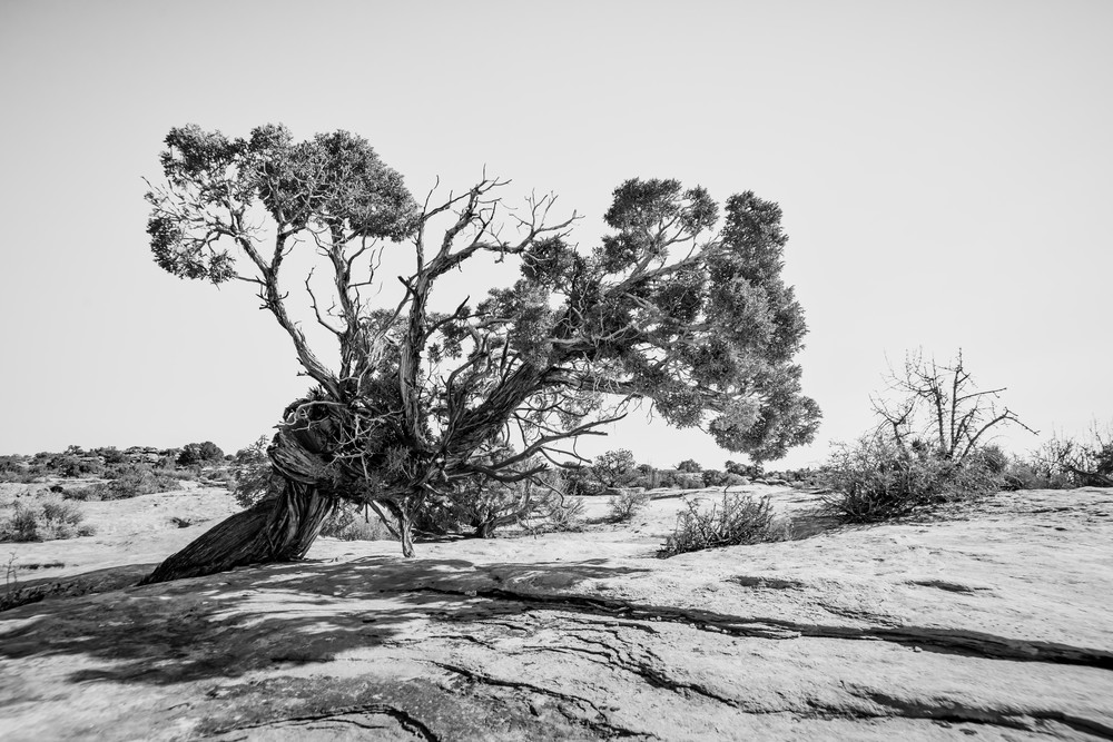 Will to survive - Utah desert photography print