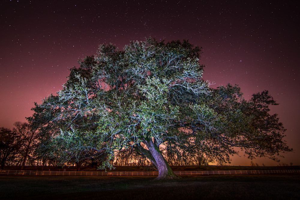 Oak Alley Signature Tree under the stars photography