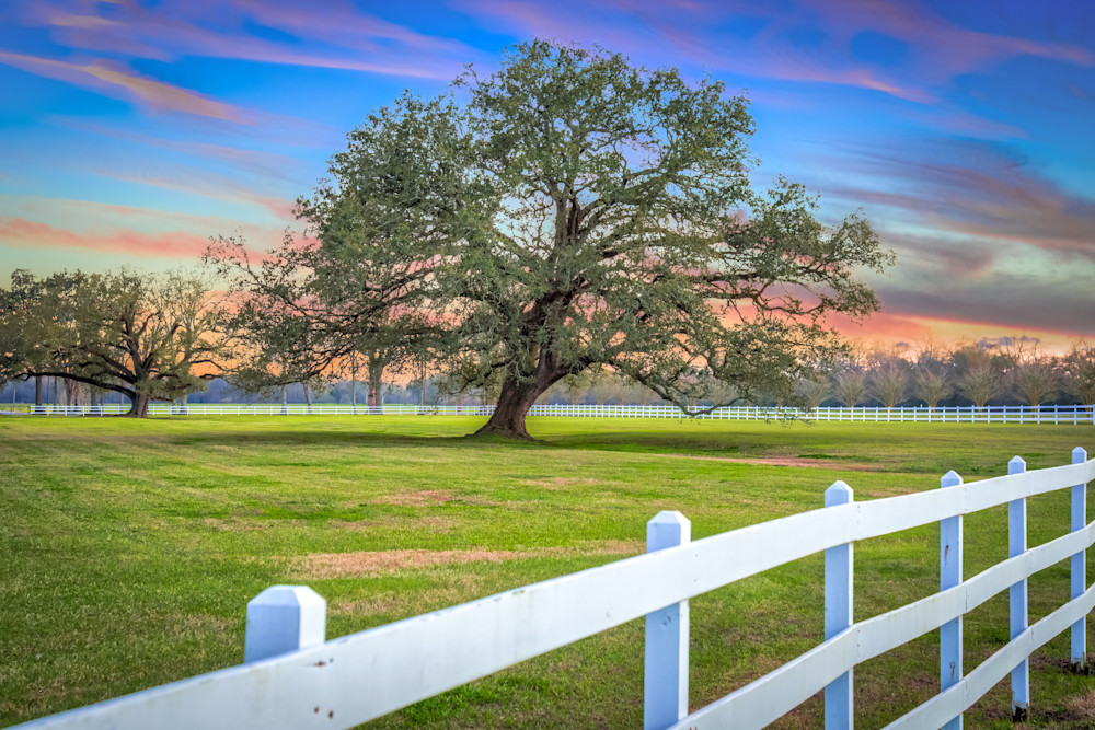 Oak Alley Signature Tree at sunset photography