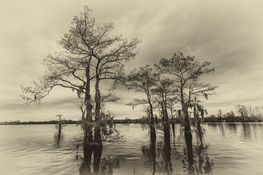 Vintage Henderson swamp photography