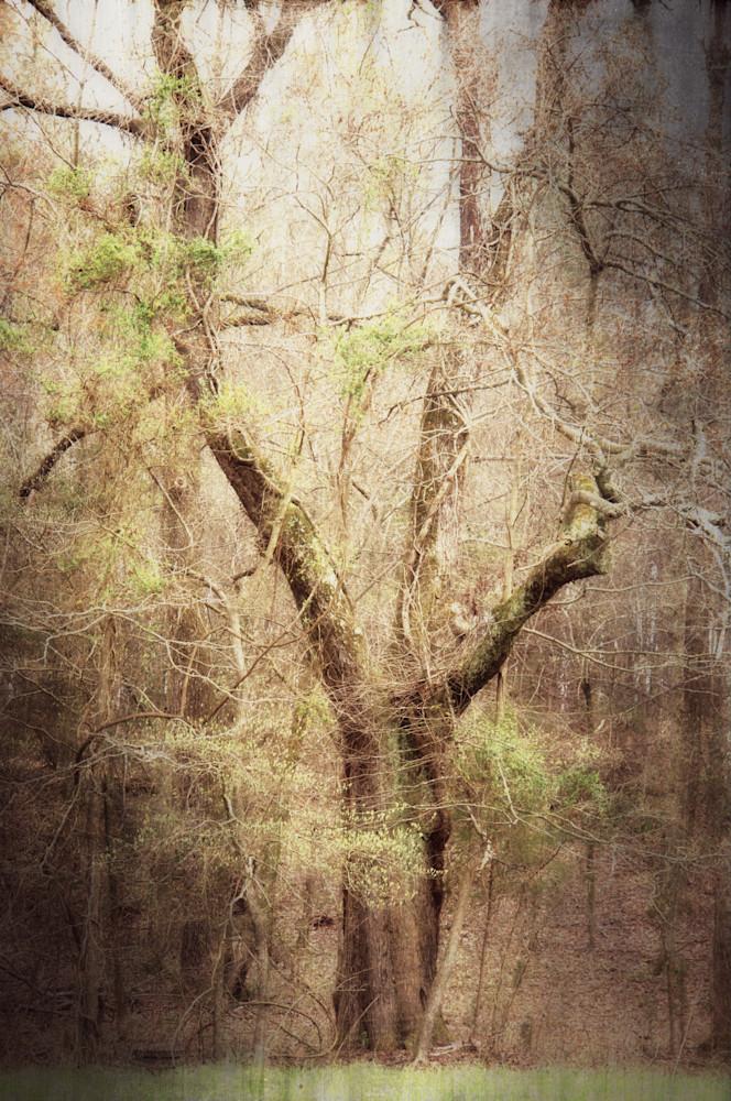 The Art Of Trees Photography Art | BenjieArts