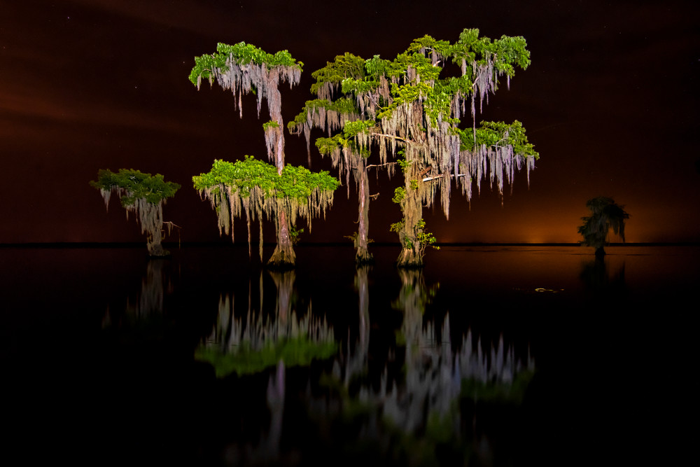 Swamp after dark photography