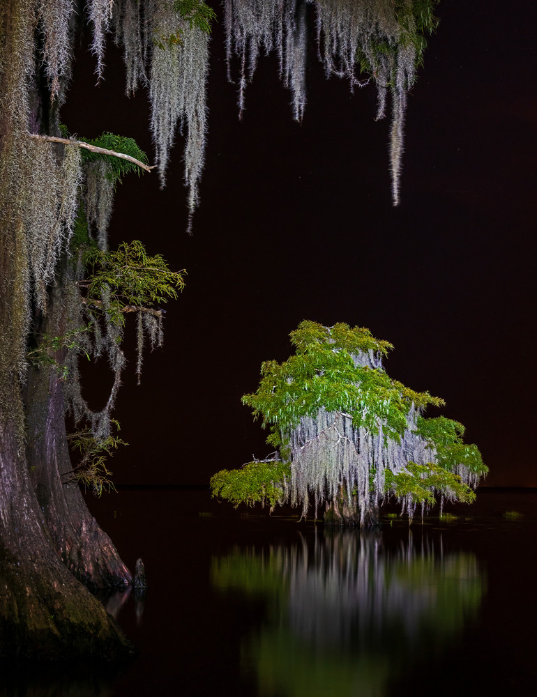My little one nighttime swamp photography