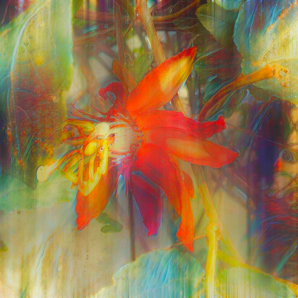 Passiflora Red Art | SkotoArt