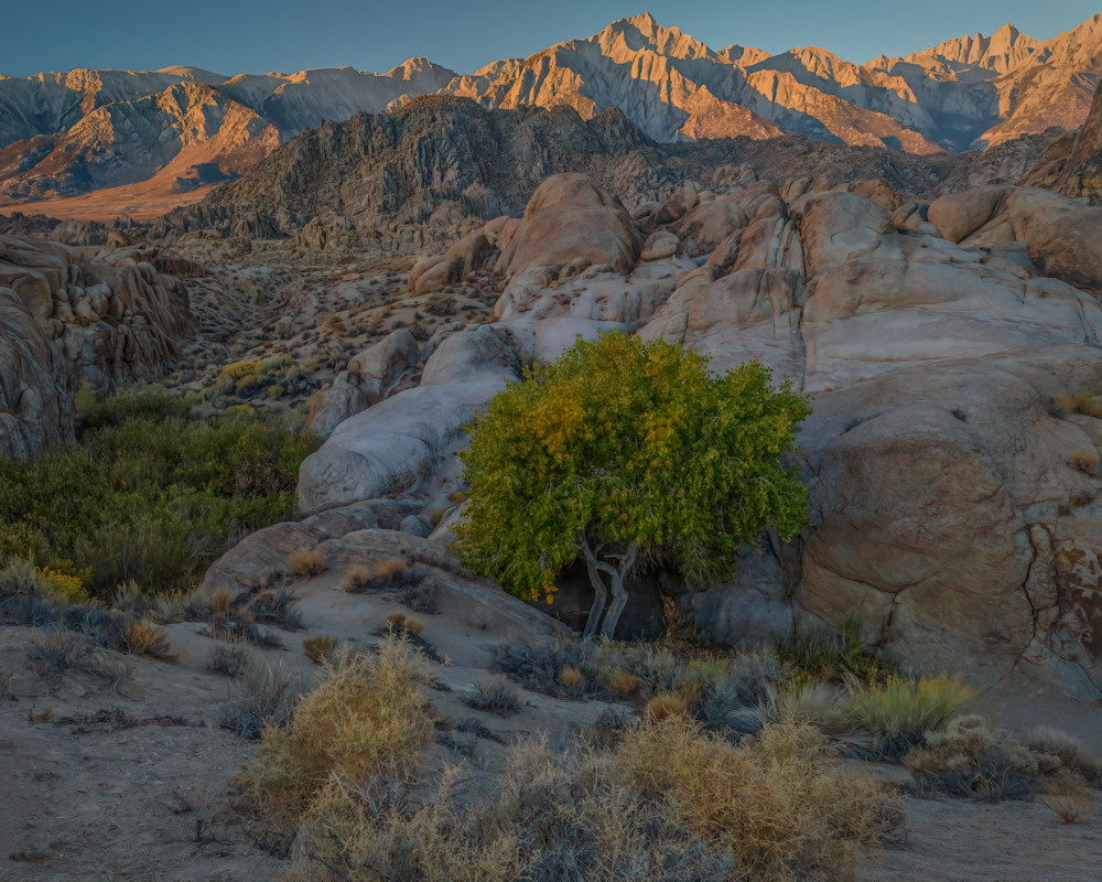 Alabama Hills Cottonwood