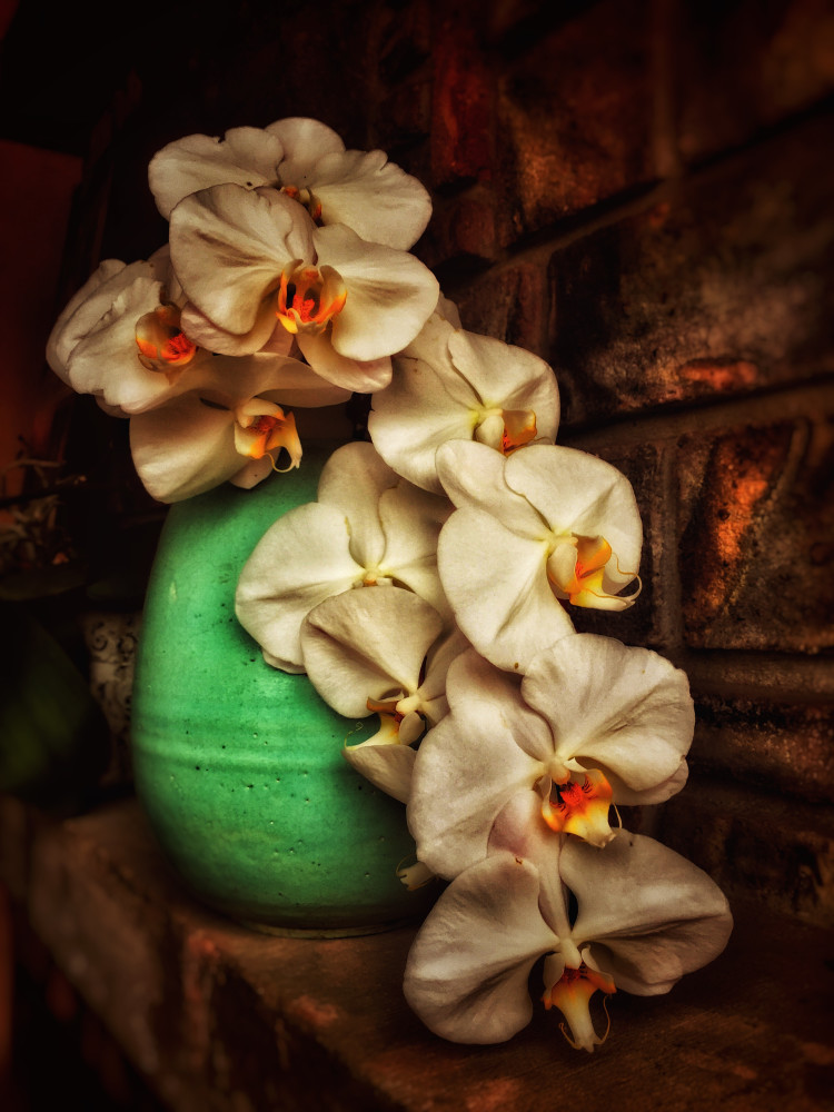 Whites Orchids Photography Art | BenjieArts